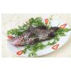 长期供应海鲜老鼠斑