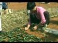 有机茶生产与加工技术