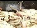 海峡名录之鹭岛海味(下) (21播放)