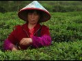 茶缘天下第六集:英德红