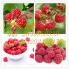 树莓提取物  覆盆子提取物  覆盆子浸膏粉