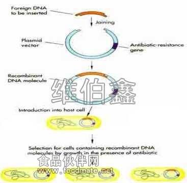 基因克隆测序步骤