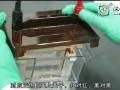 western blot实验操作视频B (163播放)