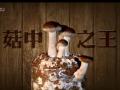 台湾香菇栽培模式