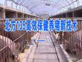 北方135高效保健养猪新技术(一) (15播放)