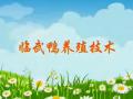 临武鸭养殖技术 (15播放)