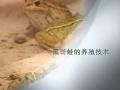 黑斑蛙的养殖技术 (4播放)