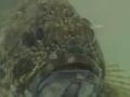 循环水养鱼虾 (40播放)