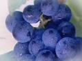 酿酒葡萄成长记 (66播放)