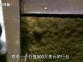 国外食品工厂 糖 (141播放)