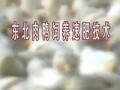 东北肉鸭饲养速肥技术 (25播放)