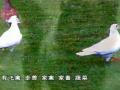 中式烹调师技能培训(二) (90播放)