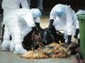 欧洲多国爆发H5N8禽流感疫情