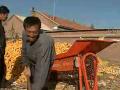 玉米果穗剥皮机安全使用技术 (73播放)