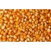 求购小麦玉米高粱