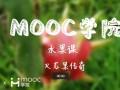 慕课MOOC水果课:火龙果传奇 (106播放)