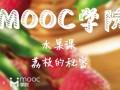 慕课MOOC水果课:荔枝的秘密 (351播放)