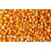 崇州声誉酒厂采购玉米高粱大米