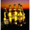 科罗娜批发价格、330ml科罗娜啤酒批发