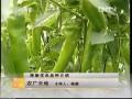 [农广天地]辣椒优良品种介绍