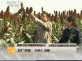 [农广天地]晋糯2号杂交糯高粱栽培技术 (13播放)