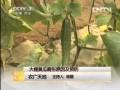 [农广天地]大棚黄瓜畸形原因及预防 (47播放)