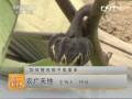 [农广天地]如何提高茄子成果率 (37播放)