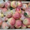 山东嘎啦苹果价格 山东苹果产地美八