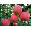 山东红星苹果价格山东红星苹果批发价格