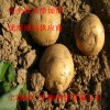 马铃薯淀粉 勾芡 保持水分 食品级