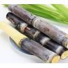 甘蔗检测农药残留,甘蔗营养成分检测报告