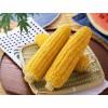 玉米检测报告,玉米农残检测,转基因检测
