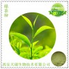 绿茶粉 绿茶速溶粉
