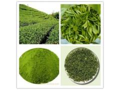 绿茶粉   绿茶喷雾干燥粉   绿茶速溶粉速溶食品饮料专用