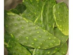 食用仙人掌农药残留检测机构,食用仙人掌重金属检测项目
