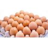 求购--红肉杂种蛋