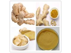 姜辣素5% 各种规格生姜提取物
