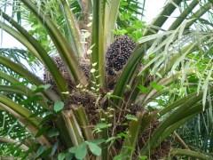 北京马来西亚棕榈油进口门到门清关代理