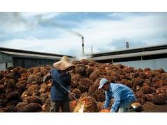 印尼棕榈油杭州进口门到门报关代理