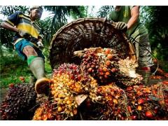 印尼棕榈油北京进口门到门报关代理