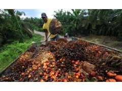 印尼棕榈油北京进口门到门专业清关服务