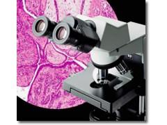 CX-31进口奥林巴斯双目(三)生物显微镜特价出售