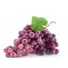 求购--葡萄
