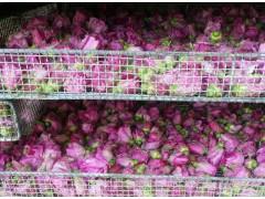 玫瑰花烘干机 干燥机设备