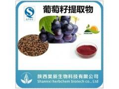 葡萄籽提取物   厂家直销  品质保证