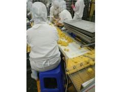 南瓜丸全自动裹面包屑机 全自动上粉上屑机 丸子上粉上屑机