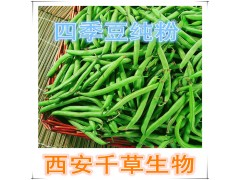 四季豆浓缩粉四季豆提取物厂家生产提取物