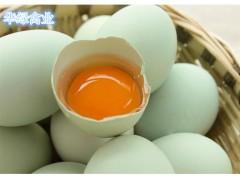 五黑一绿种蛋、华绿黑鸡种蛋 绿壳蛋鸡种蛋 受精率95%以上