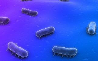 食品中沙�T氏菌的污染及�A防