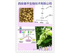 西安嘉平供应磷脂酰丝氨酸20% 50%